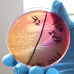 July 2013: Postdoctoral fellowship: Landscape genetics of enterobacteria in western Kenya