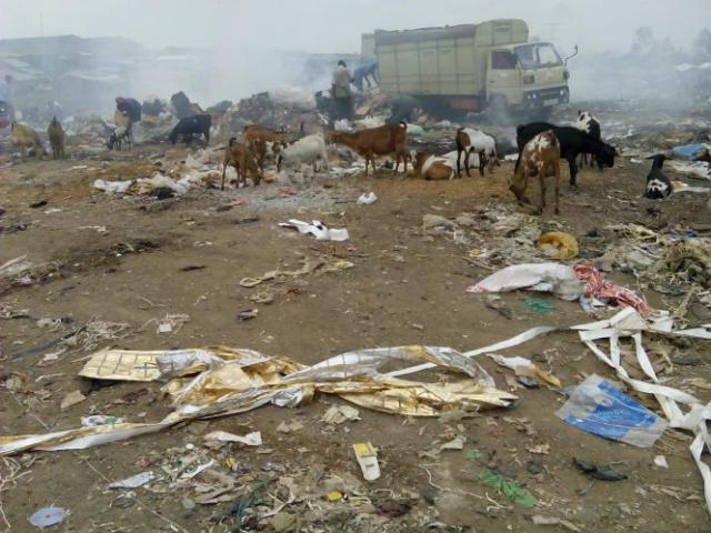 Urban Livestock Production