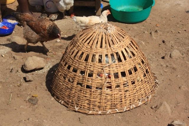 Indigenous poultry production-Korogocho