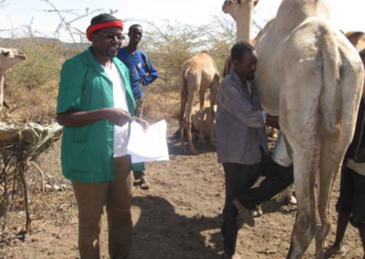 camel samplin 2
