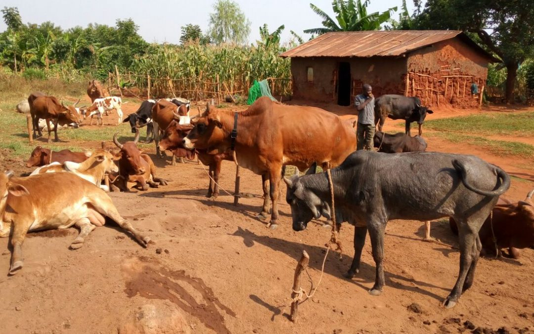 Tracking the movements of people and their livestock