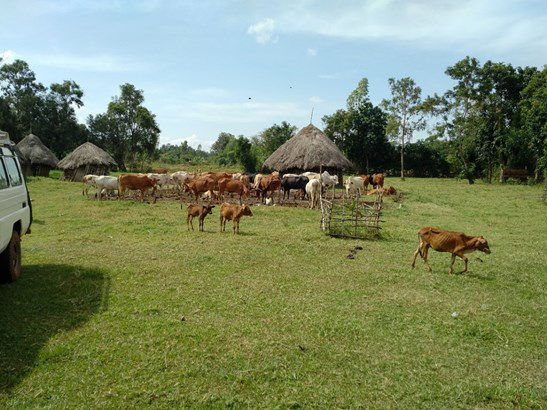 Zoonoses in Livestock in Kenya – The Beginnings of Surveillance